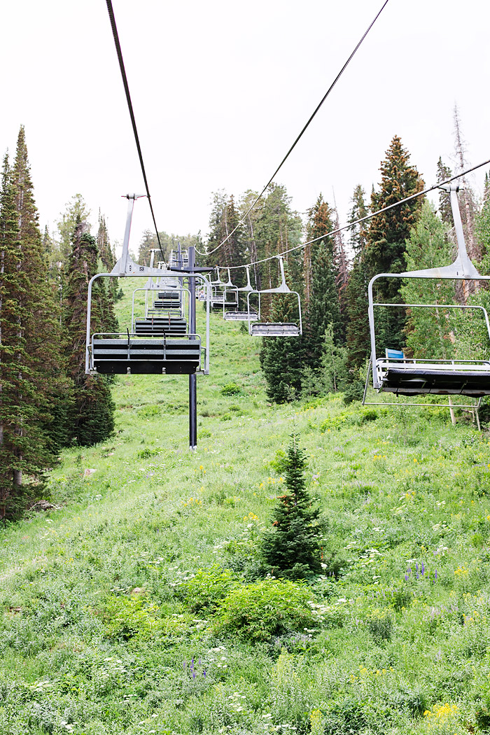 Cottonwood Canyons Foundation Wildflower Festival at Solitude Mountain Resort