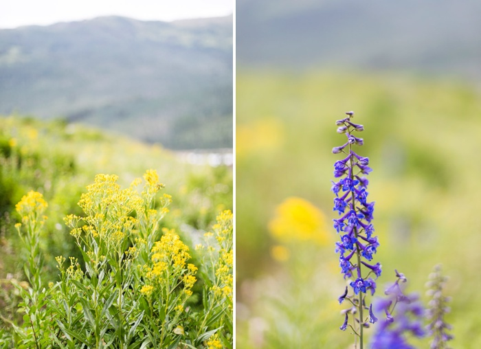 Wildflower Festival at Solitude Resort