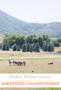 Soldier Hollow Classic Sheepdog Championship