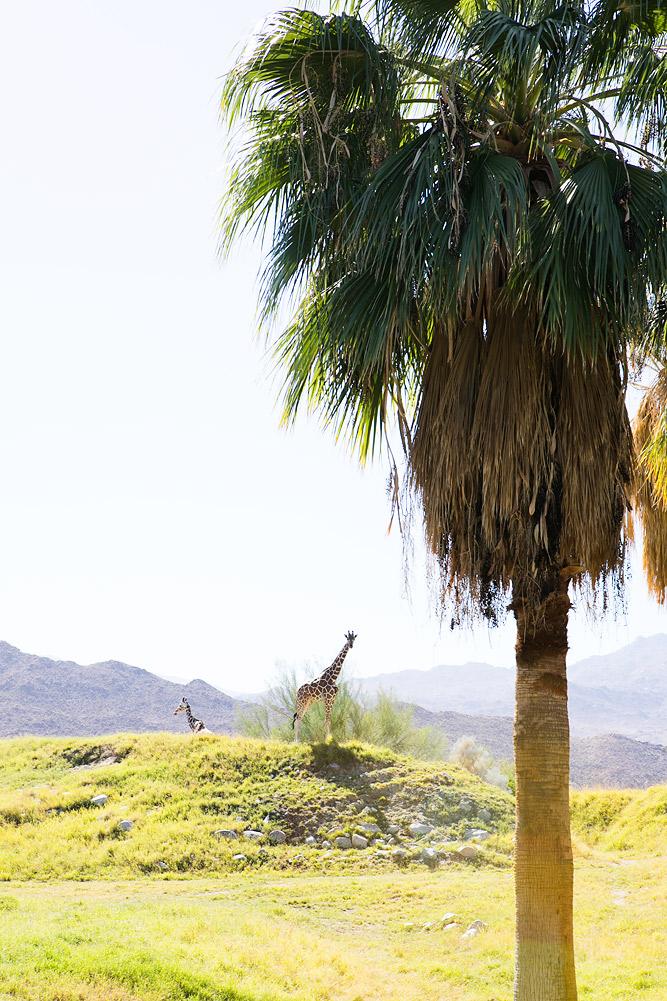 The Living Desert Zoo Giraffe Exhibit